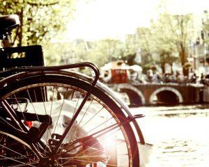 Fiets tegen een boom met zicht op de Amsterdamse grachten
