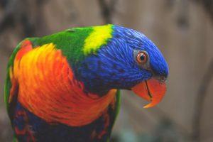 Een papegaai praat je altijd na.