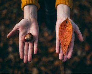 Handen. Op de één ligt een kastanje en in de ander een herfstblad herfstdip