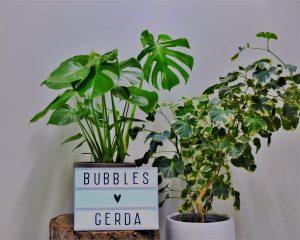 De Bubbles redactie verzorgde Gerda de Groene een week lang met de Plantsome app.