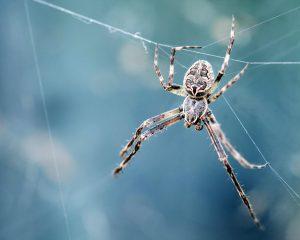 Ben jij bang voor spinnen en slangen? De reden daarvoor is nu bekend!